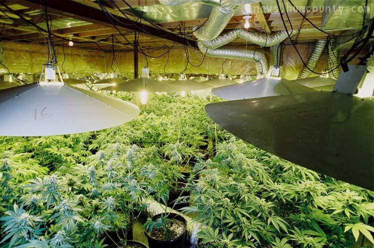Indoor Marijuana Grow Rooms