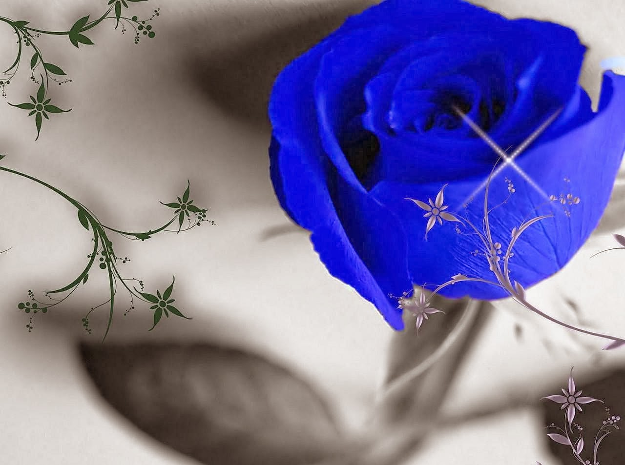 Blue And White Rose Wallpaper Blue Rose Wallpaper Background