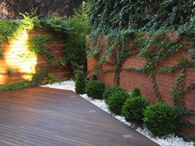 Jardinitis peque o jard n for Jardin cipres