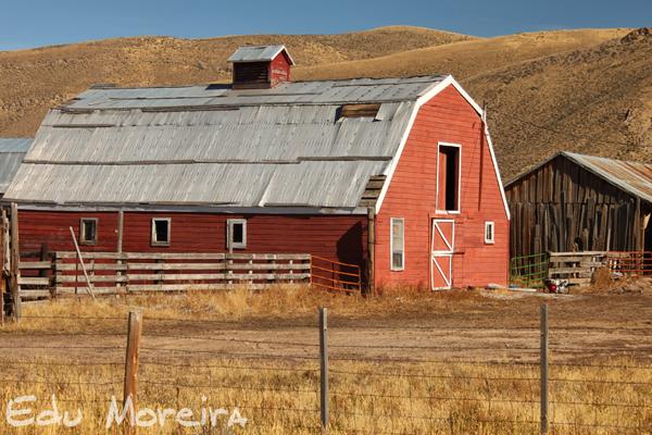 Hellen B Earp - Parente Fúria Negra - Galliard Wyoming%2B9429