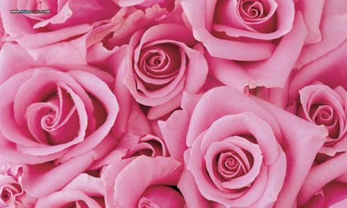 Cool Rose Pink Dark Flowers Image