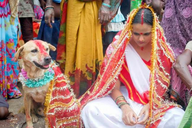 Woman in India Marries Dog to Ward Off Evil