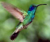 Cuento El pájaro del alma