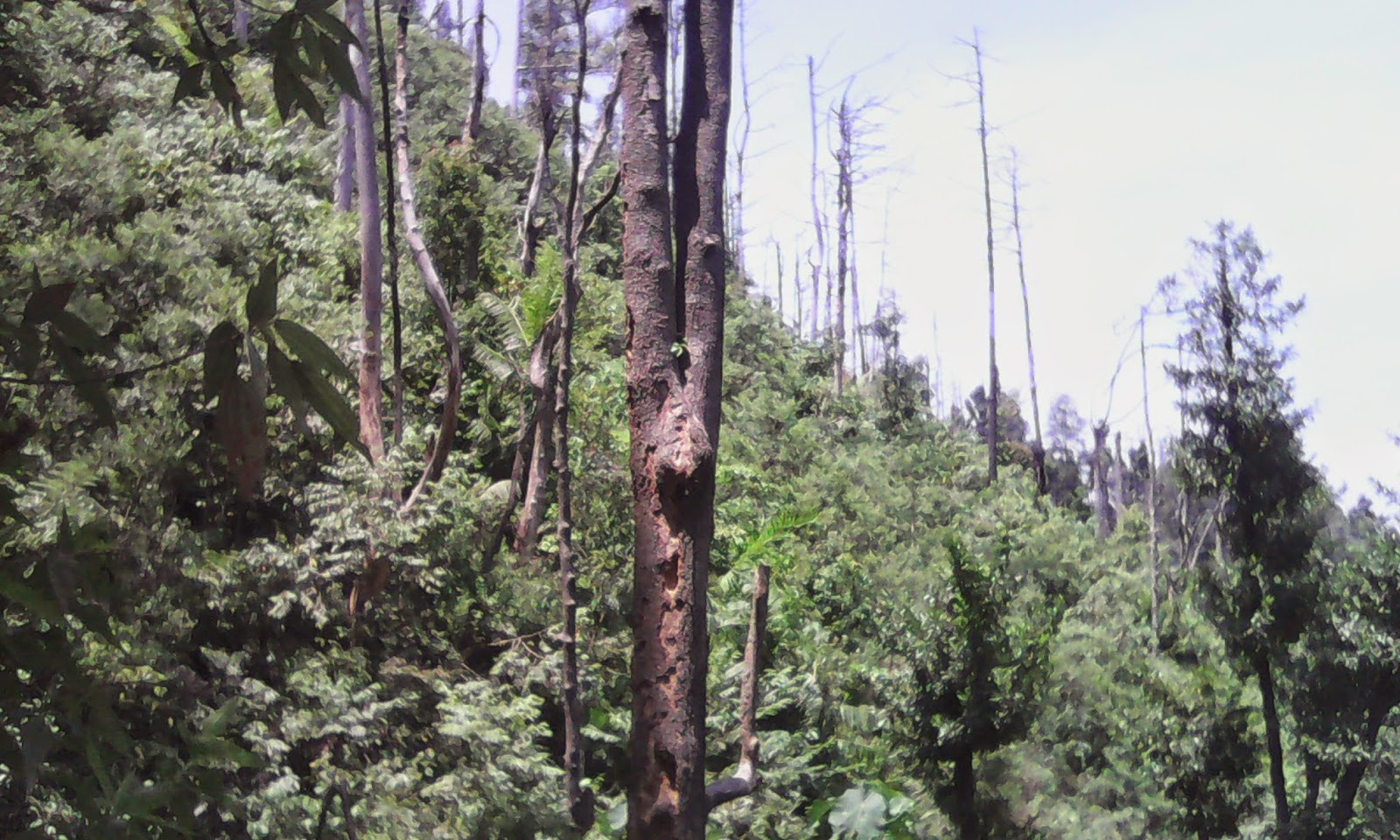 Mendaki Bukit Pronojiwo di Kabupaten Sleman, Yogyakarta