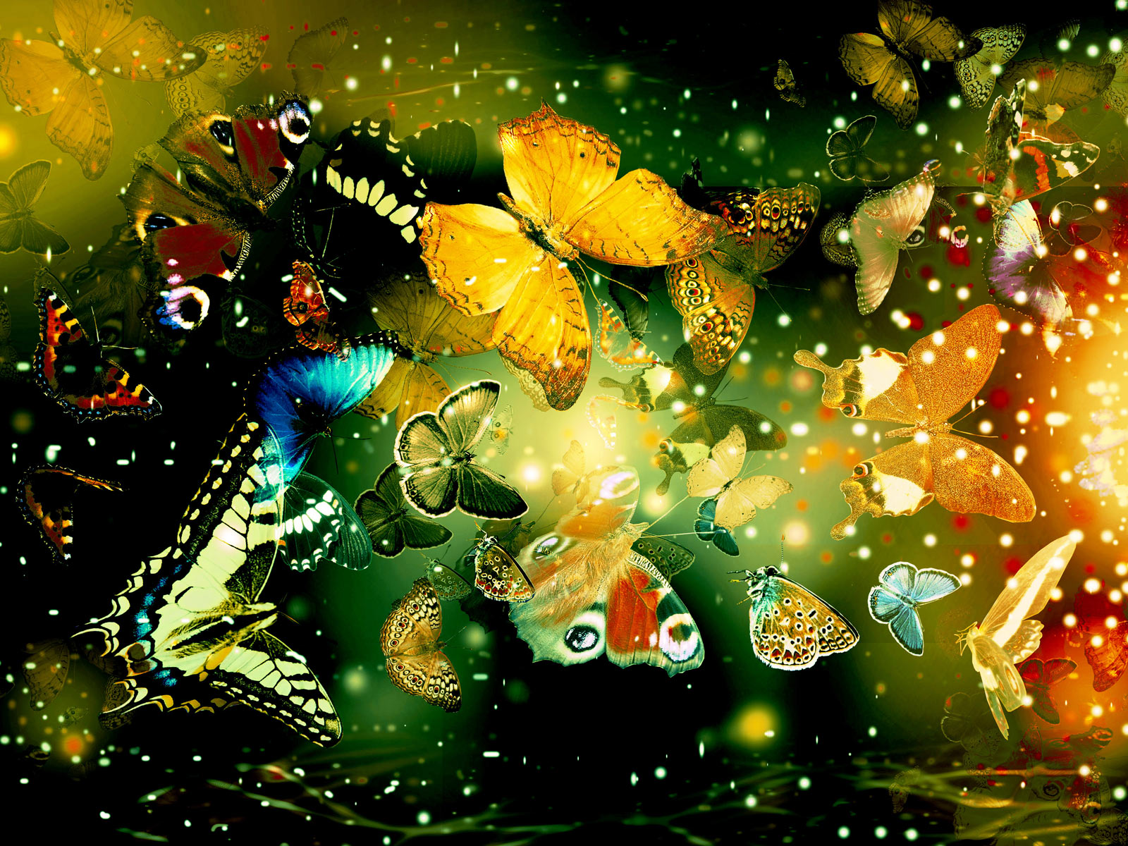 http://4.bp.blogspot.com/-2d7PS5hie2E/UKzLPzat1CI/AAAAAAAACGc/j05lDn_HVvI/s1600/desktop+wallpaper+butterflies.jpg