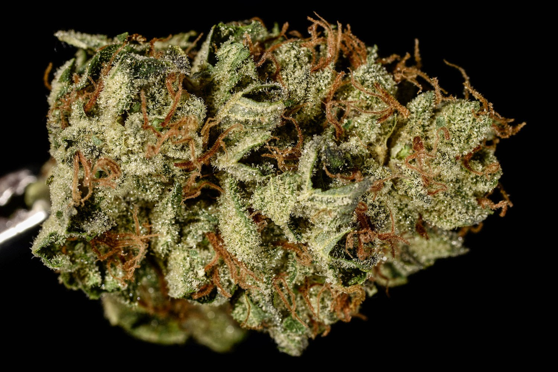 cannabis mais potente do mundo
