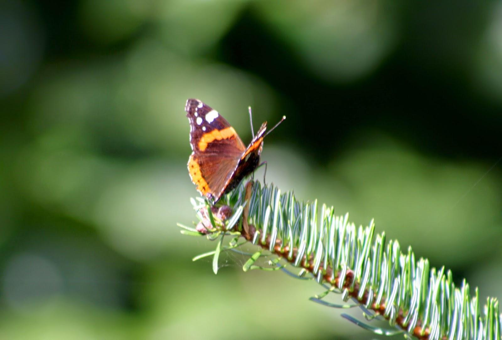 El jard n de margarita insectos auxiliares los tesoros for Insectos del jardin