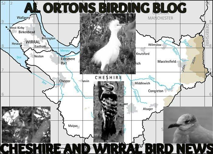 AL ORTONS BIRDING BLOG