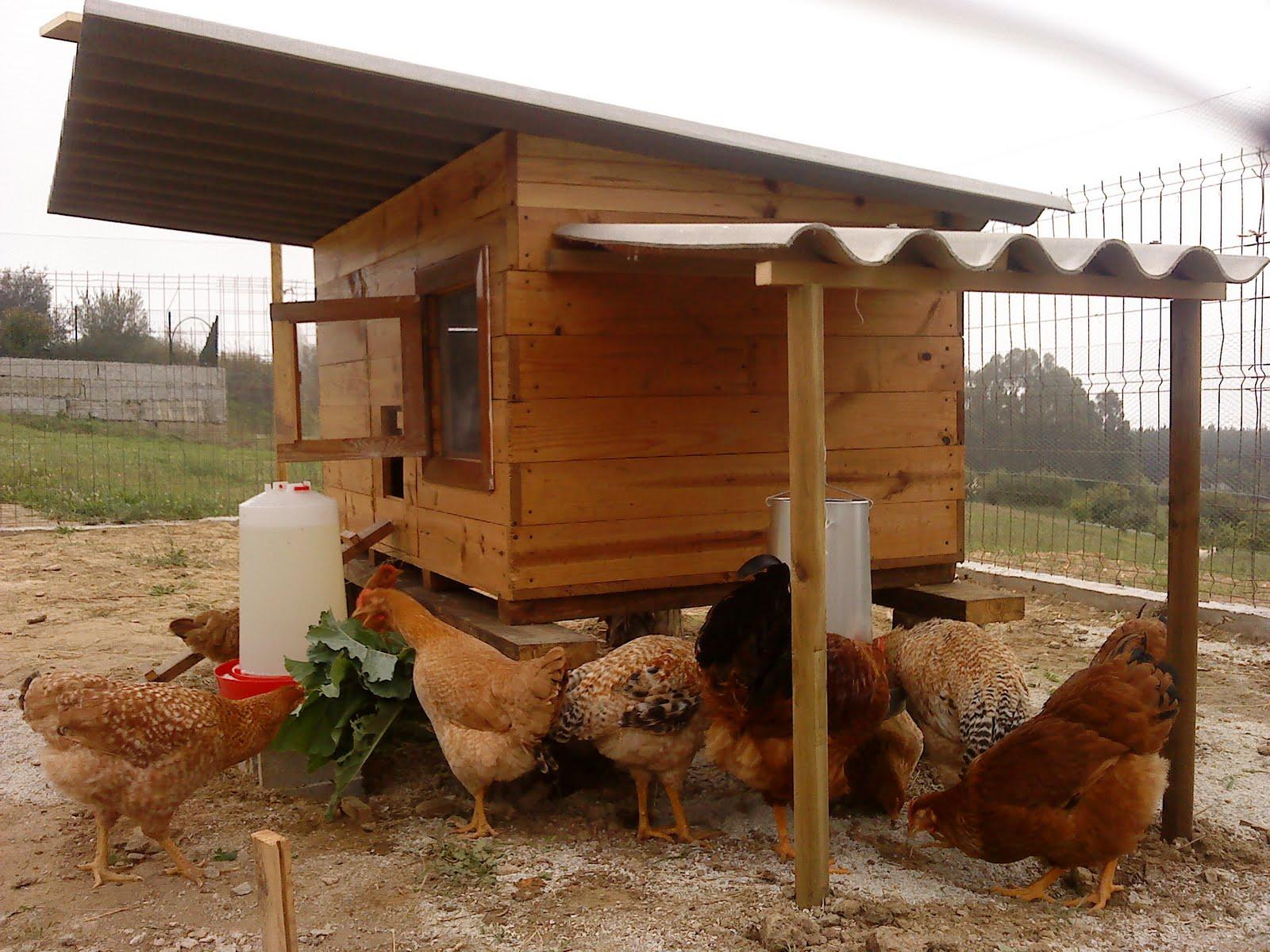 Pero mira lo que hay aqu nuevos gallineros de madera ii - Gallineros de obra ...
