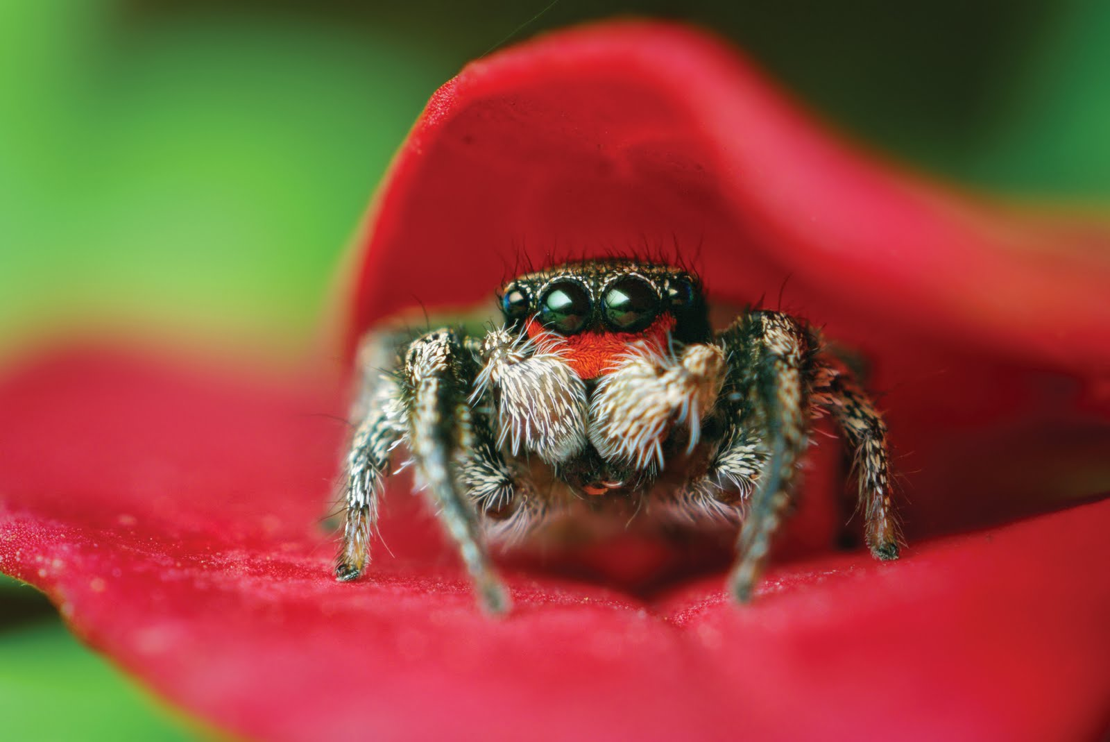 Tecniche di ipnosi: Sognare ragni: cosa vuol dire sognare un ragno