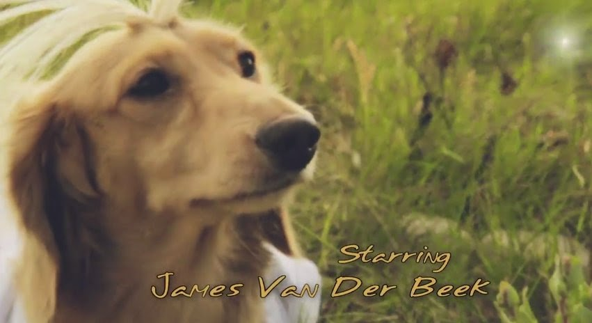 OMG! Dogs star in 90s hit remake of Dawson's Creek