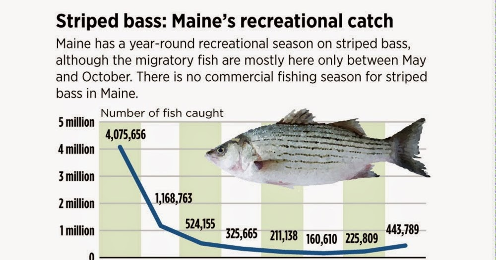 A view from the beach maine fishermen endorse striper for Maine out of state fishing license
