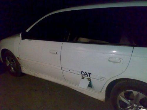 puerta para gatos en auto