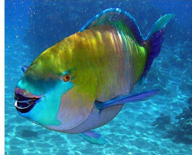 Как спят рыбы Клуб почемучек Это интересно  как спит рыба попугай