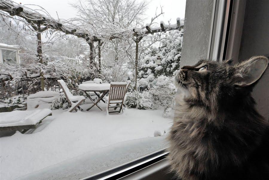 Суббота, кот в одиночестве, за окном снег