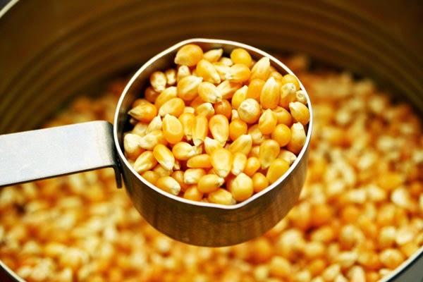 Popcorn-Kernals