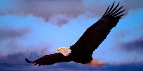 Soñar con un Águila