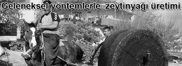 Geleneksel yöntemlerle  zeytinyağı üretimi