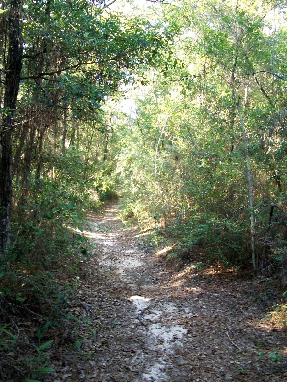 Homes For Rent In Nature Trail Pensacola Fl