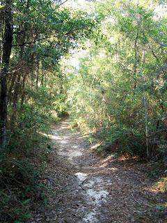 UWF Nature Trail, Pensacola, FL 32514