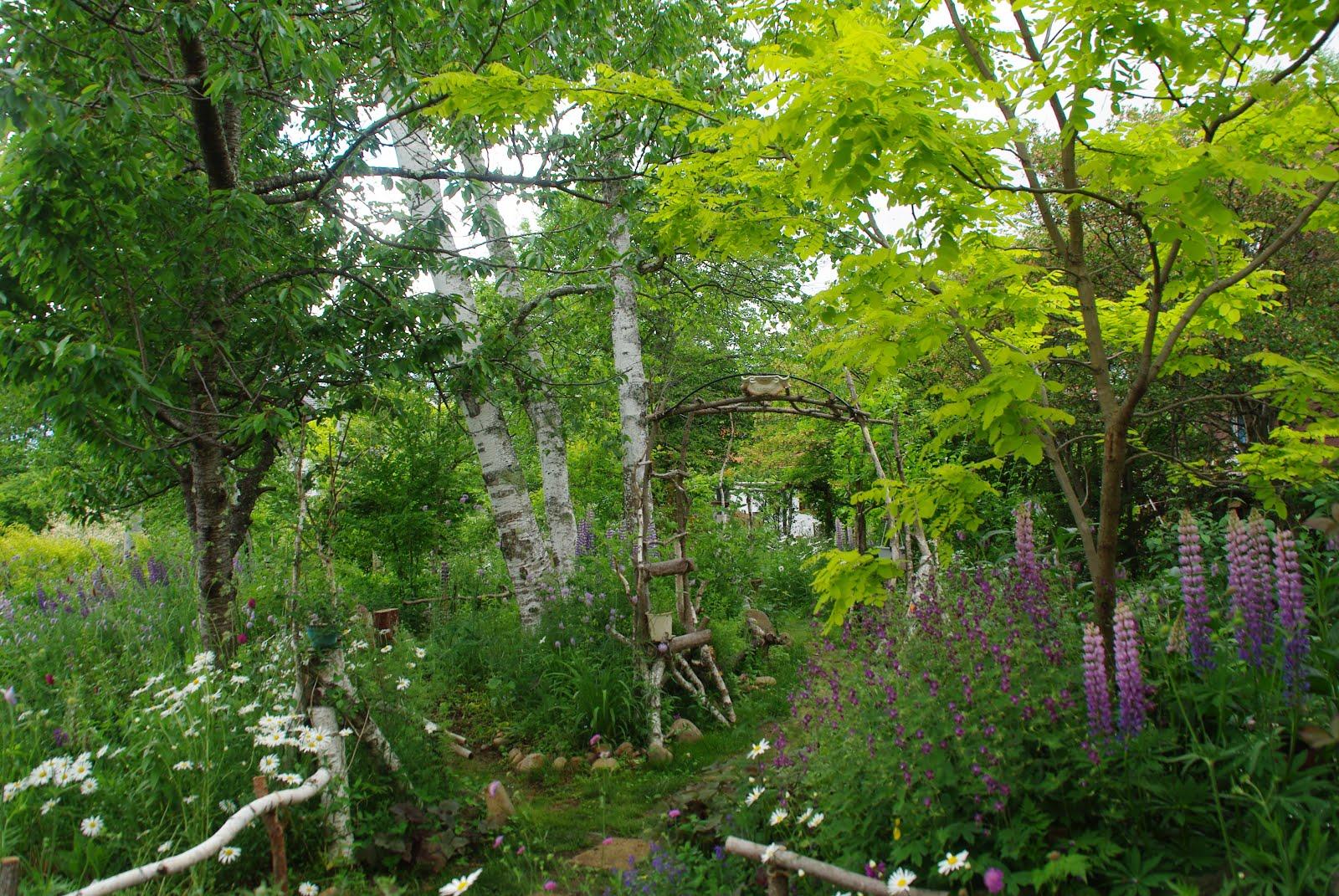 ルピナスが咲き、庭は華々しくなる。
