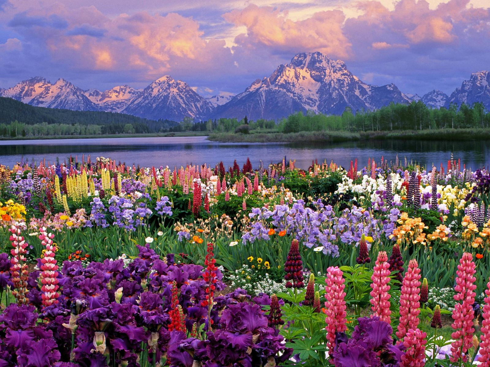 spring-flowers-pictures.jpeg