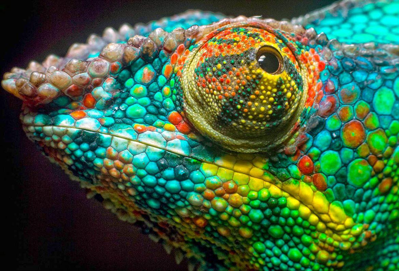 27. Chameleon Rainbow by Péter Viasz