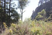 big sur hiking pfeiffer state park