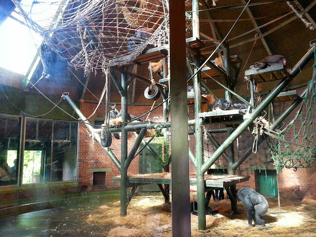 #MatalanZooDay, Chester Zoo with Matalan Bloggers, North West event