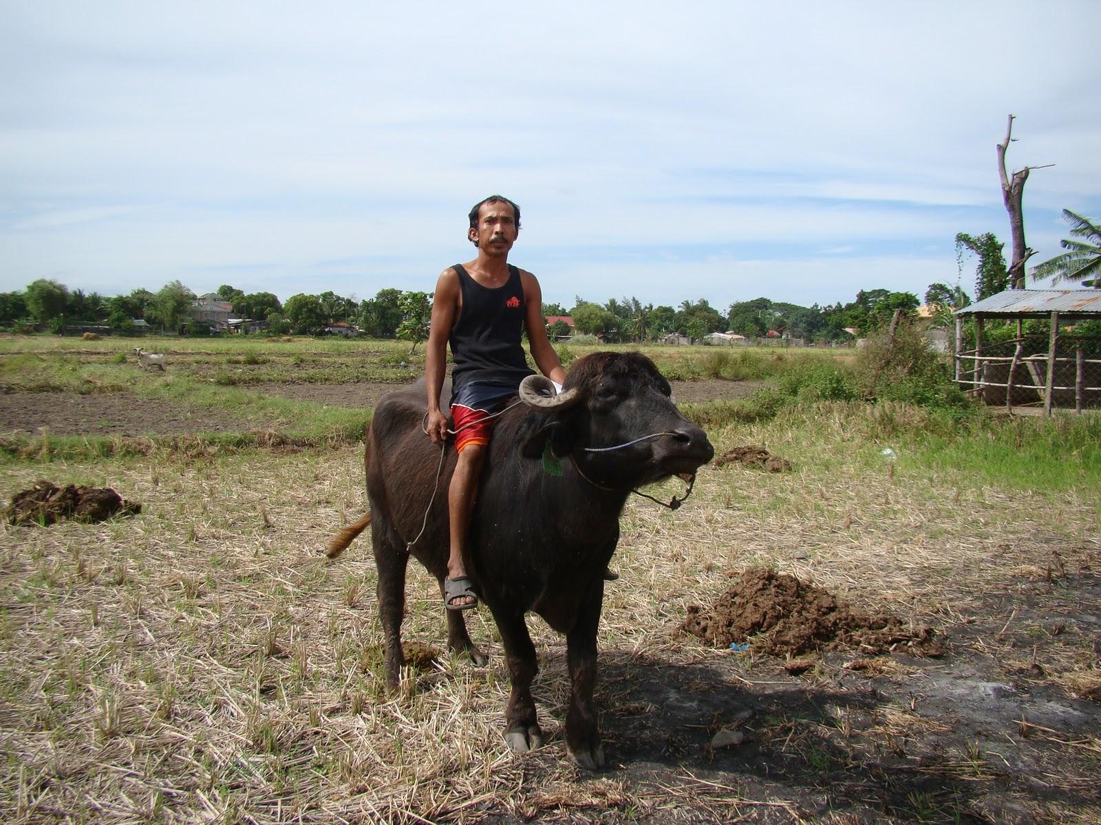 San Jose (Nueva Ecija) Philippines  city photos : ... Snapshots: Dairy Farmers in San Jose City, Nueva Ecija, Philippines