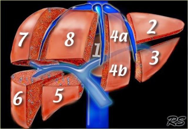 Segmentación hepática