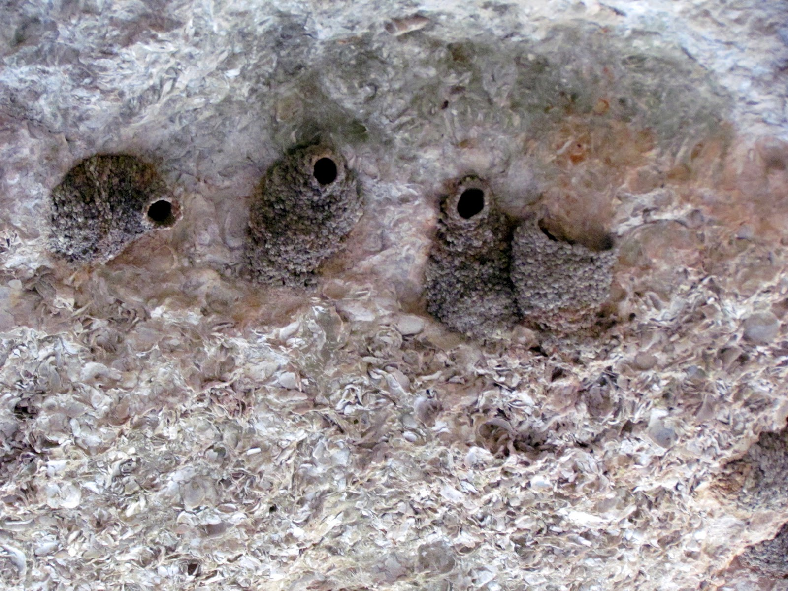 the roof is peppered with swallow s nests