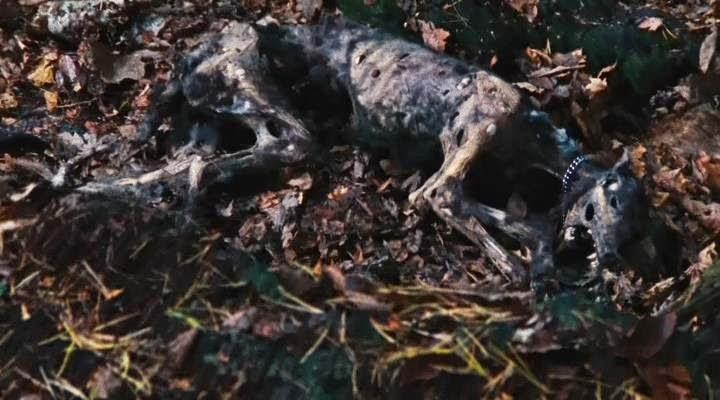 Dog Corpse