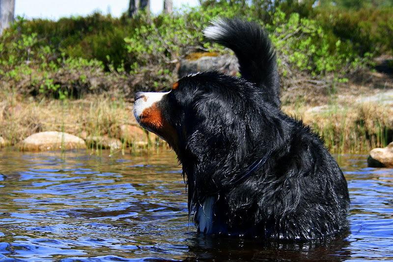 Mitt liv som hund