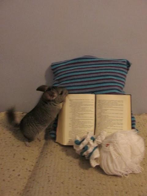 Wspólne dzierganie i czytanie z Pusią
