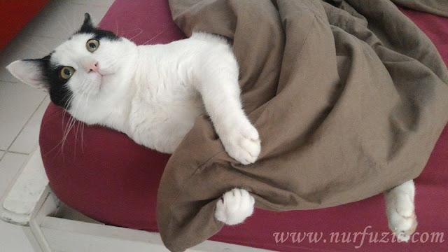 Hamdan Karipuley Si Kucing Comot