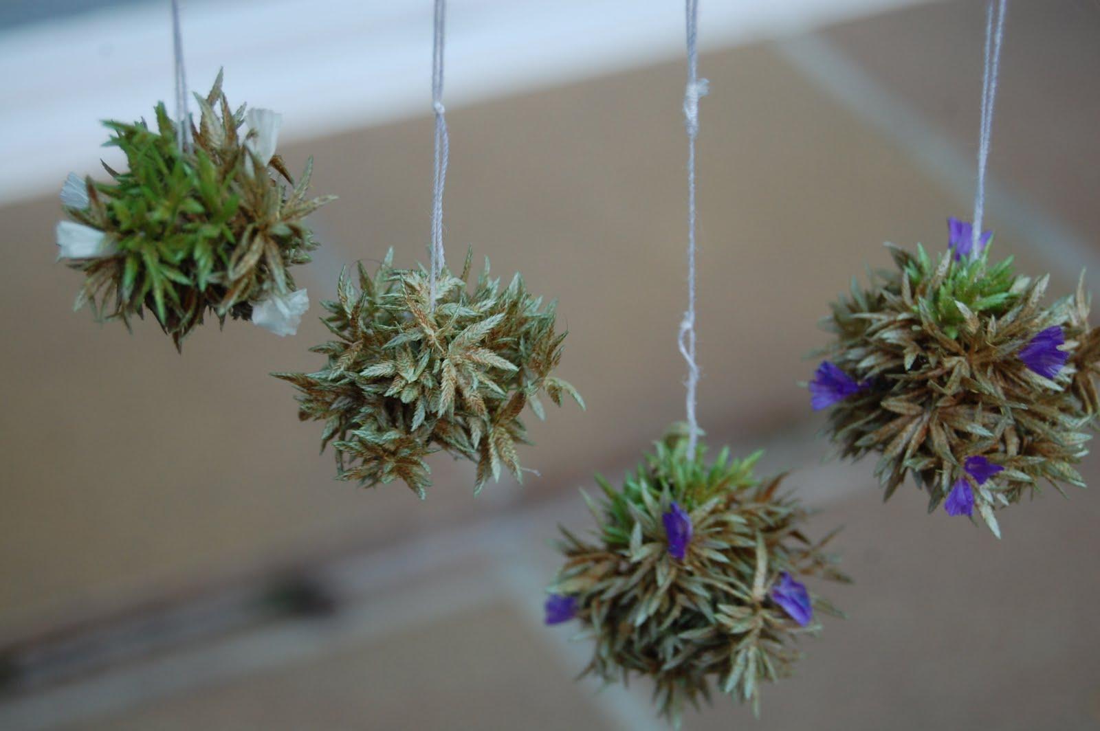 El Rinc N De Las Miniaturas Plantas Colgantes Y Otras M S