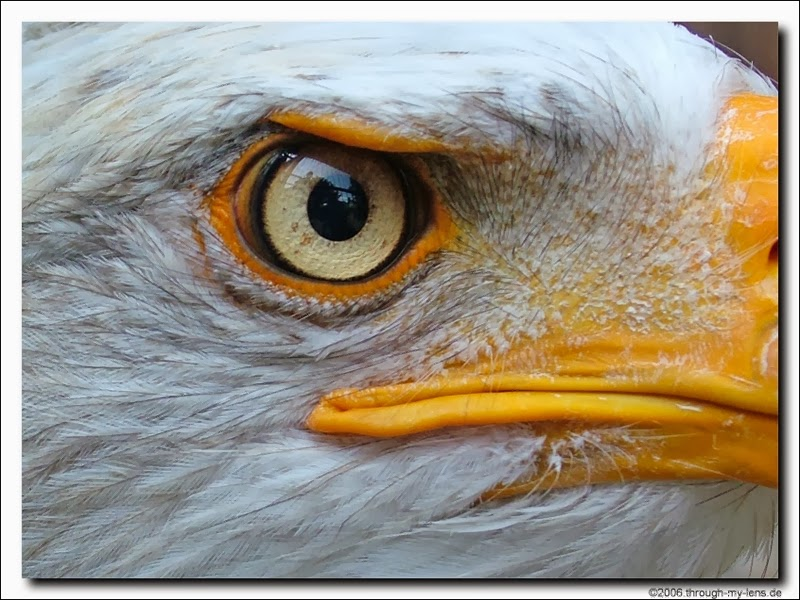 Rules Of The Jungle Interesting Facts About Eagles