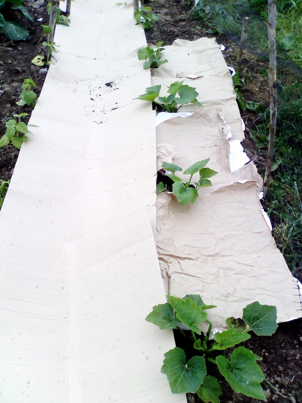 Combater ervas daninhas com cartão