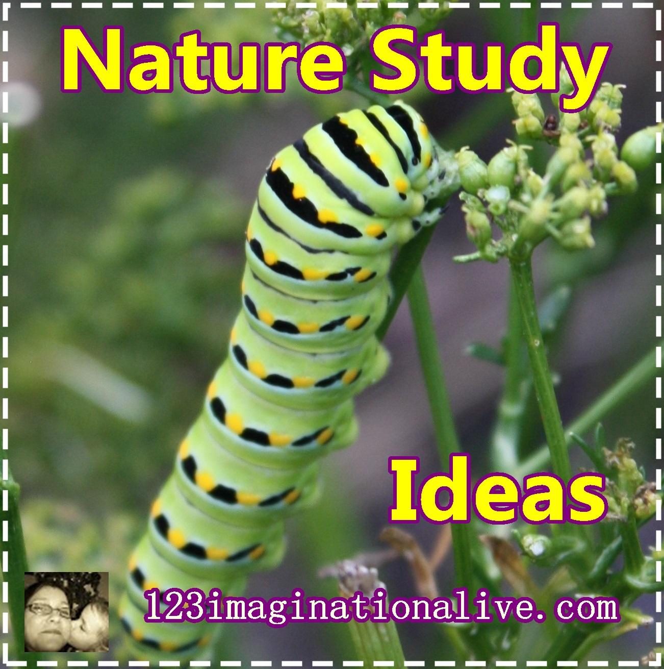 Nature Study Ideas