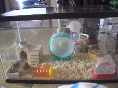 hamsters cuidados