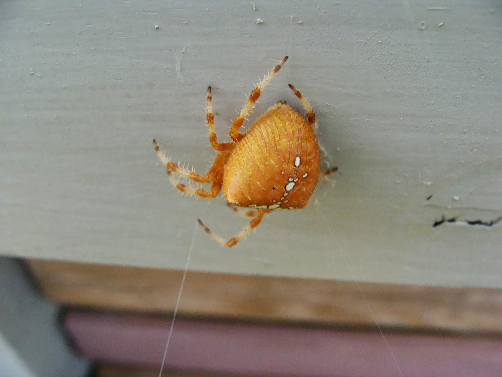 Jardine et ris une b b te dans mon jardin - Une araignee dans la salle de bain ...