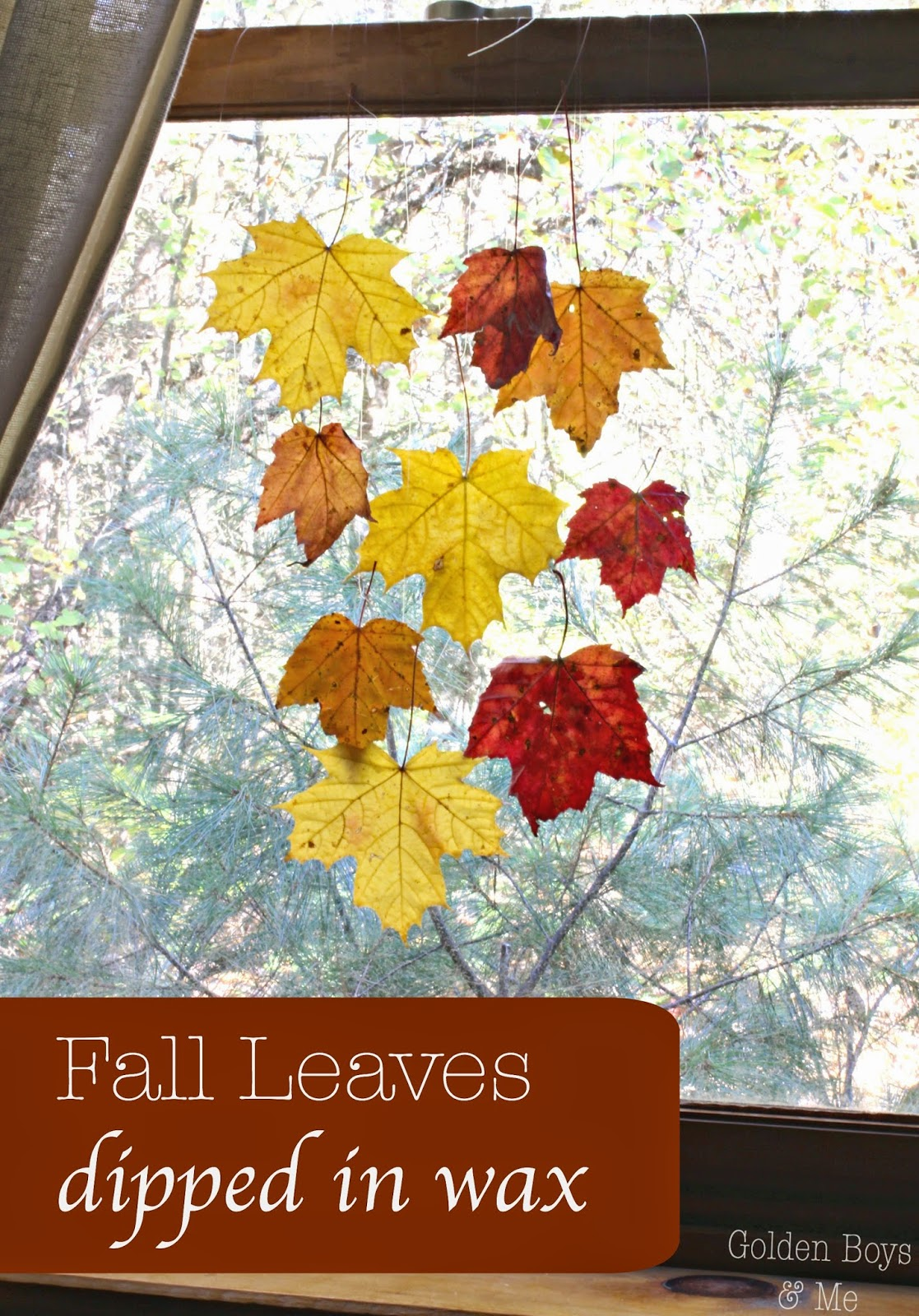 Fall Leaves dipped in wax to preserve them-www.goldenboysandme.com