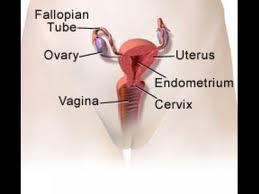 Tratamente naturiste contra cervicitei