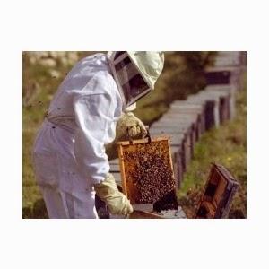 Ferma apicola