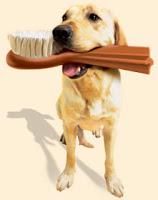 cachorro-higiene bucal
