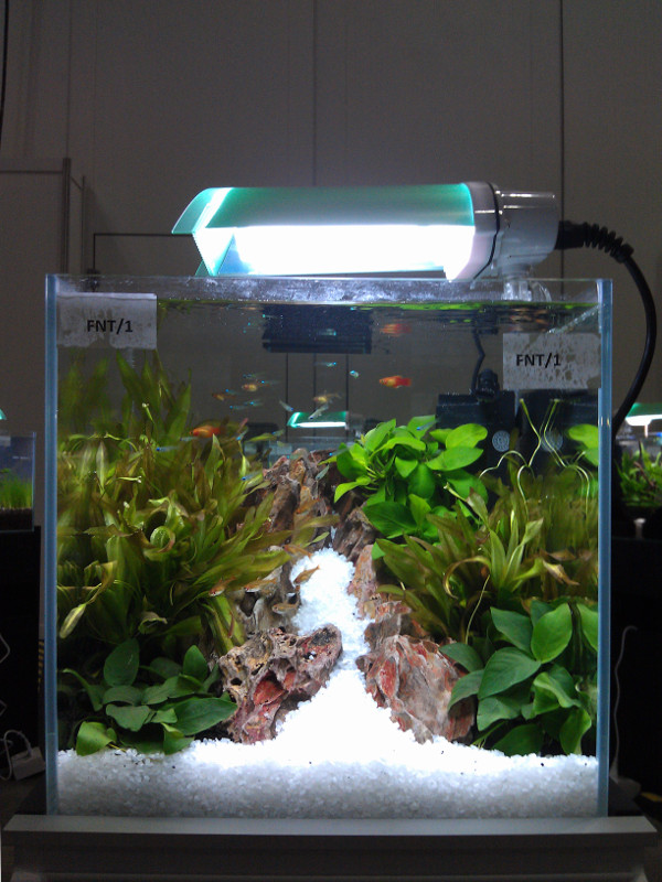 Aquatic art aquarama 2013 planted tank competition for Plante nano aquarium