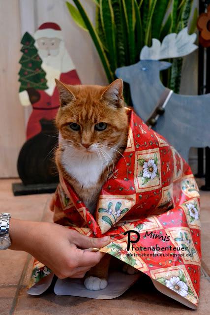Katze Mimi wird als Geschenk verpackt