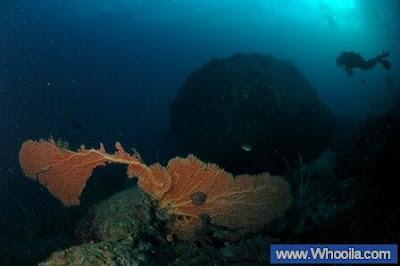 016+DSC 1332 2+ +Whooila.com Foto/Gambar Pemandangan Indah dibawah Laut Pulau Anambas