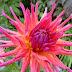 Another Garden Visit (flashback To September)...